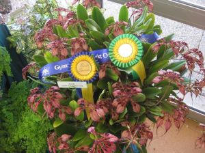 Reserve Champion 2012